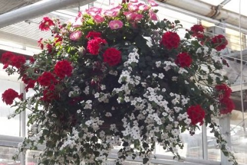 Combination Hanging Baskets